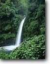 Stock photo. Caption: Peace Waterfall, Peace River Central Volcanic Range Heredia Province,  Costa Rica Central America -- falls waterfalls flowers flowers wildflowers tropical rainy central america impatien rivers eastern travel tourist destination destinations landscape landscapes dramatic large sweet rainforest rainforests landmarks landmark attraction attractions scene