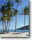 Stock photo. Caption: Coconut palms, Spring Bay   and Baliceaux Island, Bequia St. Vincent & The Grenadines Windward Islands, Lesser Antilles -- sunny calm tranquil palm trees tree beach beaches tropics winter aqua blue seas tropical destination destinations vacation vacations tourist travel sailing sail caribbean exotic warm climate clear azure scenic scenics sandy sand relaxing inviting quiet