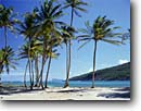 Stock photo. Caption: Coconut palms, Spring Bay   and Baliceaux Island Bequia St. Vincent & The Grenadines Windward Islands, Lesser Antilles -- sunny calm tranquil palm trees tree beach beaches tropics winter aqua blue seas tropical destination destinations vacation vacations tourist travel sailing sail caribbean exotic warm climate clear azure scenic scenics sandy sand relaxing inviting quiet