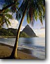 Stock photo. Caption: Coconut palms Soufriere Bay and Petit Piton St. Lucia Windward Islands,  Lesser Antilles -- saint tree palm caribbean seas tropical destinations destination vacation vacations mountain peak peaks pitons tourist travel exotic warm climate ocean leisure relaxation idyllic secluded beach beaches landmarks landmark tropics sunny winter clear scenics