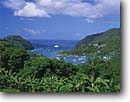 Stock photo. Caption: Bananas and Marigot Bay St. Lucia Windward Islands Lesser Antilles -- saint tree palm caribbean seas tropical destinations destination vacation vacations landscapes tourist travel exotic warm climate ocean boats boating harbour harbor harbours harbors boat sailboats sailboat anchored paradise sailing sail scenics scenic