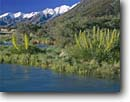 Stock photo. Caption: Blue Stream, giant spaniard   and Ben Ohau Range Mt. Cook National Park,  Southern Alps South Island, New Zealand -- mount parks south pacific islands dramatic power powerful snow capped peak peaks creeks landscape landscapes mountain mountains glacially  scenic scenics spring sunny blue skies clear  rivers streams flowers flower fishing