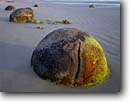 Stock photo. Caption: Moeraki Boulders Moeraki Boulders Scenic Reserve South Pacific Ocean South Island, New Zealand -- geological shore shoreline shorelines travel destination destinations tourist seascape seascapes places rocks polished stone stones beach beaches famous round rounded turtles turtle unusual formation natural features landmarks landmark formations geology