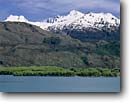 Stock photo. Caption: Willows at the head of Lake Wanaka   and the Southern Alps   above Young River Valley South Island, New Zealand -- islands lakes mountain mountains snowy snow capped spring tourist destination destinations attraction attractions landscape landscapes trees framed aqua blue sunny clear skies colour colours color colors scenic scenics