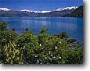 Stock photo. Caption: Roses and yellow bush lupine Lake Wanaka Southern Alps South Island, New Zealand -- islands lupines lupinus flowers flower wildflowers wildflower arboeus lakes mountain mountains snowy snow capped spring tourist destination destinations attraction attractions landscape landscapes aqua blue awesome inspiring inspirational stunning colours