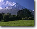 Stock photo. Caption: Mt. Taranaki in Egmont National Park   from Dawson Falls Road Taranaki North Island,  New Zealand -- mountains tree trees snow peak peaks alpine south pacific islands volcano volcanos volcanoes dramatic high southern hemisphere cone shape shaped awesome mountain parks dramatic volcanic volcanoe sunny spring clear blue skies landscape landscapes scenics