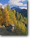 Stock photo. Caption: Dairyman hut, larches and Mt. Padon   from Highway 244, Passo Campolongo The Dolomites Veneta Region,  Italy -- world mountains peak peaks fall autumn europe european travel international destination destinations pastoral landscape landscapes color colors tree trees larch deciduous simple isolation independence pride foliage buildings building eternal time sunny