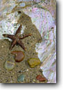 Stock photo. Caption: Sea star and wave polished stones   in abalone shell Big Sur Coast Monterey County, California -- animal animals american seastar seastars stars starfish still life beach beaches shells rocks artistic nature tidepool tidepools inhabitants details detail form forms