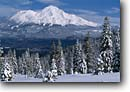 Stock photo. Caption: Mt. Shasta in winter   from Castle Lake Nordic Ski Area Cascade Range Siskiyou County, California -- mount volcanic range ranges cascade dramatic snow capped peaks peak  mountian mountains scenic scenics landscape landscapes snow sunny blue wintery mount trees covered areas cross country skiing