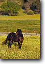 Stock photo. Caption: Horse in California Valley Carrizo Plain San Luis Obispo County California -- united states america lifestyle horses  portrait portraits equine