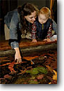 Stock photo. Caption: Tidepool exhibit Sea stars and anemones Oregon -- education educating pacific ocean oceans united states america  enjoying observing observe nature display aquariums destination destinations tourist attraction attractions children kids mother child teach teaching people
