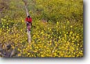 Stock photo. Caption: Mountain biking on a trail   through a field of wild mustard Santa Susana Mountains Los Angeles County,  California -- united states america people outdoor recreation biker bicycle bicycles trail trails bike cross country crosscountry freedom solitude excitement trails flower flowers wildflower wildflowers field spring yellow bike sports sport bikes landscapes scenics