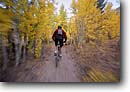 Stock photo. Caption: Mountain biking Rock Creek Inyo National Forest Sierra Nevada,  California -- Keywords: united states america high mountain high country sierras people outdoor recreation biker bicycle bicycles trail trails bike road roads transportation cross country crosscountry extreme fall autumn foliage freedom solitude excitement sports sport riding