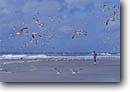 Stock photo. Caption: Jogger on the beach Torrey Pines State Beach San Diego San Diego County,  California -- united states america outdoor recreation exercise beaches gulls seagulls seagull gull birds jogging people southern runner running jogging joggers runners