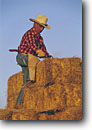 Stock photo. Caption: Stacking haybales San Luis Obispo County California -- united states america person people western cowboys chaps cowboys ranching ranch cattle heritage lifestyle boots spurs tough alfalfa bale work ethic tough