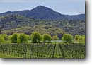 Stock photo. Caption: Saracina Vineyards and Duncan Peak Russian River Valley near Hopland Mendocino County,  California -- wine country spring rural crops grape grapes agriculture vine vines countryside beauty farming farm rural pastoral bountiful united states america growing region famous rows harvest weeping willows organic landscape landscapes sunny