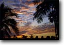 Stock photo. Caption: Coconut palms at sunset Flamingo, The Everglades Everglades National Park Florida -- landscape landscapes scenic scenics seascape seascapes clouds sunsets eastern east southern south parks inviting quiet places palm trees tree destination destinations