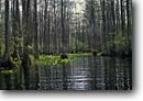 Stock photo. Caption: Bald cypress swamp Canoe Okefenokee National Wildlife Refuge Georgia -- united states america south southeast southeastern deep marsh marshes southern parks travel tourist attraction attractions endangered environment swamps canoeing cypresses  outdoor recreation canoe trip excursion wild people wetlands nature enjoying views