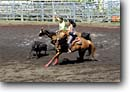 Stock photo. Caption: Paniolos team roping Honokaa Rodeo Arena Hamakua District Island of Hawaii, Hawaii -- cow cows rope horses horse arenas cattle teams kids young people