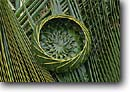 Stock photo. Caption: Coconut palm frond magic Island of Kauai Hawaii -- united states america basket baskets weaving weave weaver hawaiian craft arts crafts tourist items item souvenir souvenirs plant plants fronds palms