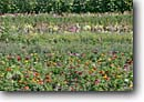Stock photo. Caption: Flower garden New Plymouth Payette County Idaho -- garden gardens flower flowers colorful farm farms