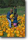 Stock photo. Caption: Picking the right pumpkin   for Halloween Merimack County New Hampshire --   united states america pumpkins agriculure family families halloween selection choices harvest season help helping sharing quality time searching choice choices decision decisions children child mother daughter people