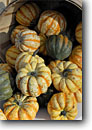Stock photo. Caption: Squash Farmers market at Howe Meadow Cuyahoga Valley National Park Summit County,  Ohio -- squashes farmer markets vegetables bounty bountiful crop cash crops faa autumn