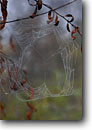 Stock photo. Caption: Heart spider web Seven Ponds Trail Tinker