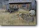 Stock photo. Caption: Old ranch in Beaver Valley   Highway385 Black Hills South Dakota -- tractor tractors ranch ranches barn barns