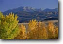 Stock photo. Caption: Fremont cottonwoods along Colorado River   and the La Sal Mountains Colorado Riverway Colorado Plateau, Utah -- united states america canyon country   mountain parks blue skies clear sunny landscape landscapes scenic views view scenics autumn fall foliage