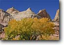 Stock photo. Caption: Fremont cottonwood & Navajo sandstone Capitol Reef, Waterpocker Fold Capitol Reef National Park Colorado Plateau, Utah -- united states fall autumn canyon country parks plateaus canyons desert deserts layers sunny landscape landscapes clear skies scenic scenics  slickrock destination destinations tourist attraction attractions landmarks landmark cottonwoods