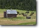 Stock photo. Caption: Old farm buildings near Liberty Highway 97 Wenatchee Mountains Washington -- Keywords: united states america old barns ranch house barn homestead abandoned landscape landscapes silo building buildings ranching pastoral rustic state tin roof ranches farms farming eastern northern northwest northwestern