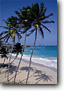 Stock photo. Caption: Coconut palms Bottom Bay Saint Philip Parish Barbados -- island caribbean tropical destinations destination vacation vacations tourist travel sunny warm idealic exotic holiday holidays beach beaches secluded white sandy sand palm trees tree artistic nature aqua blue perfect landscapes islands sunny blue skies