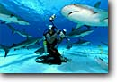 Stock photo. Caption: Caribbean reef shark  and diver Bahamas Atlantic Ocean -- Carcharhinus perezi sharks fish fishes underwater scuba diving oceans scene scenic danger fear travel tourist destination destinations daring trust brave animal animals wildlife saltwater sealife marine life photography predator predators reefs