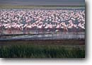 Stock photo. Caption: Flamingo Arusha National Park Tanzania Africa --  deserts african flamingos bird flock flocks birds flocking pink wild wildlife habitat large landscape landscapesshorebird shorebirds water wading wadingbird wadingbirds