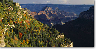 Stock photo. Caption: Bigtooth maples, Roaring Springs Canyon    and San Francisco Peaks North Rim,  Kaibab Plateau Grand Canyon National Park Colorado Plateau, Arizona -- panorama panoramas panoramic panoramics landscape landscapes sunny clear scenic scenics scene fall autumn canyons country parks distance view views vista vistas aspen tree trees mountains plateaus maple color foliage world heritage site sites