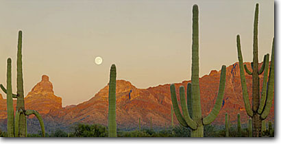 Stock photo. Caption: Saguaros and moon Ajo Range Organ Pipe Cactus National Monument Sonoran Desert,  Arizona -- deserts parks park monuments southwest warm saguaros valley mountain  morning spring panoramic panoramics panoramas blue sunny clear landscapes landscape moonset moons planetary eternity eternal environment arms saguaro cactus scenic scenics
