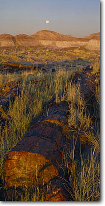 Stock photo. Caption: Petrified log and setting moon Long Logs Petrified Forest National Park Colorado Plateau,  Arizona -- deserts monuments southwest panoramic panoramics panoramas blue sunny clear skies moon moons landscape landscapes geology geologic southwestern arid attraction attractions destination destinations parks fossils fossilized scenic scenics