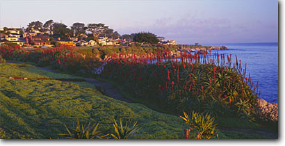 Stock photo. Caption: Tree aloe along Ocean View Boulevard Hays Perkins Park Pacific Grove,  Monterey Peninsula Monterey County,  California -- pacific ocean coast united states america west coasts seascape seascapes travel tourist destination destinations points flower flowers cityscape landscaped coastal property city cities panoramic panoramics panoramas clear spring sunny blue skies landscape