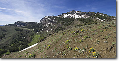 Stock photo. Caption: Summit trail below Warner Peak South Warner Wilderness Warner Mountains, Modoc National Forest Modoc County, California -- panoramic panoramics united states america northern timberline mules ears flower flowers trails peaks wildernesses backcountry backpacking hiking summer highcountry summits sunny blue sky clear skies landscape landscapes