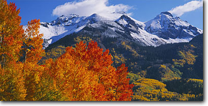 Stock photo. Caption: Aspens near Lizard Head Pass   and Yellow Mountain Uncompahgre National Forest San Juan Mountains, Colorado -- aspen tree trees fall autumn color forests united states rocky rockies picturesque peaceful colour colors colours dramatic panoramic panoramics panoramas panorama landscape landscapes scenic blue skies clear sunny views snow capped peaks peak view snow