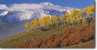 Stock photo. Caption: Aspens, gambel oaks and Mt. Wilson   from Deep Creek Mesa San Miguel Mountains Rocky Mountains, Colorado -- aspens tree trees fall autumn color forests united states rockies picturesque peaceful breathtaking stunning peak peaks fourteener fourteeners pastel pastels elegant majestic solitude peace panoramic panoramics panoramas sunny blue skies landscapes views