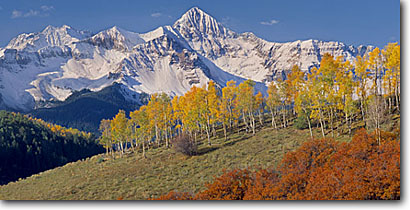 Stock photo. Caption: Aspens, gambel oaks and Mt. Wilson   from Deep Creek Mesa San Miguel Mountains Rocky Mountains, Colorado -- aspens tree trees fall autumn color forests rockies picturesque peaceful breathtaking stunning peak peaks fourteener fourteeners pastel pastels elegant majestic solitude peace panoramic panoramics panoramas sunny blue skies landscapes views clear hope