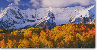 Stock photo. Caption: Aspens near Dallas Divide   and the Sneffels Range San Juan Mountains Rocky Mountains,  Colorado -- aspens tree trees fall autumn color forests united states rockies picturesque peaceful breathtaking stunning peak peaks fourteener fourteeners pastel pastels elegant majestic solitude peace panoramic panoramics panoramas blue skies sunny clear snow scenic