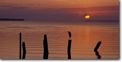Stock photo. Caption: Night heron at sunrise Florida Bay Everglades National Park Florida -- panorama panoramas panoramic panoramics coastal wetlands wetland parks herons bird birds silhouette sunrises pilings perched wading silhouettes travel southern south coast shore landscape landscapes scenics scenic world heritage site sites destination