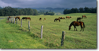 Stock photo. Caption: Kula Upcountry Island of Maui Hawaii -- panorama panoramas panoramic panoramics hawaiian tropic paradise tropics vacation warm winter islands landscapes scene animals animal horse horse livestock grazing ranchland ranches grassland landscape scenic