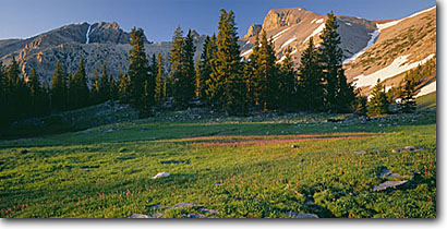 Stock photo. Caption: Shooting stars near Stella Lake   and Wheeler Peak Great Basin National Park Nevada -- summer wildflower flower flowers flower wildflowers panoramic panoramics panoramas panorama mountain sunny clear blue skies meadow meadows lush highcountry rockies rocky evolution time trust solitude landscapes scenic mountains parks landscape scenics