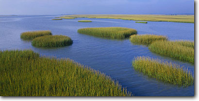 Stock photo. Caption: Tidal salt marsh Port Royal Sound near   Hunting Island State Reserve Beaufort County,  South Carolina -- united deep south southern states america creeks river rivers lowcountry swampy pristine estuarine estuary estuaries unspoiled ecosystem ecosystems reserves marshes  landscape landscapes scenic scenics summer spring