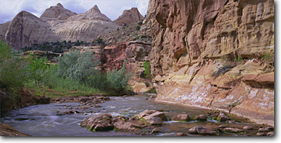 Stock photo. Caption: Fremont River, Fremont cottonwoods &   Navajo sandstone domes, Capitol Reef Capitol Reef National Park Colorado Plateau,  Utah -- deserts canyon country parks southwest united states colorful erosion landscape landscapes life rock canyons slickrock rivers water flowing colourful desert southwestern panoramic panoramics panoramas stream streams riparian habitat rivers scenics scenic