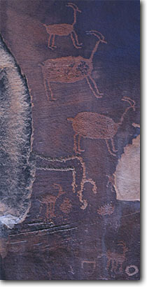 Stock photo. Caption: Big horn sheep petroglyphs  Indian Creek Canyon Newspaper Rock State Historical Park Colorado Plateau,  Utah -- united states petroglyph rock anasazi native american ancient archeological site sites culture cultural communication archeology mysterious spiritual bighorn panoramic panoramics panoramas representing animal animals depicting panorama varnish deserts